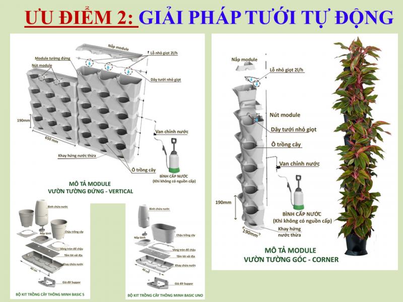 Giải-phap-tuoi-tuong-dung-9-e1493281155437