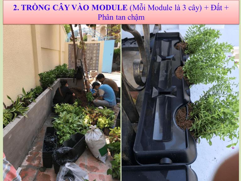 huong-dan-thi-cong-tuong-dung-minigarden-36-768x576