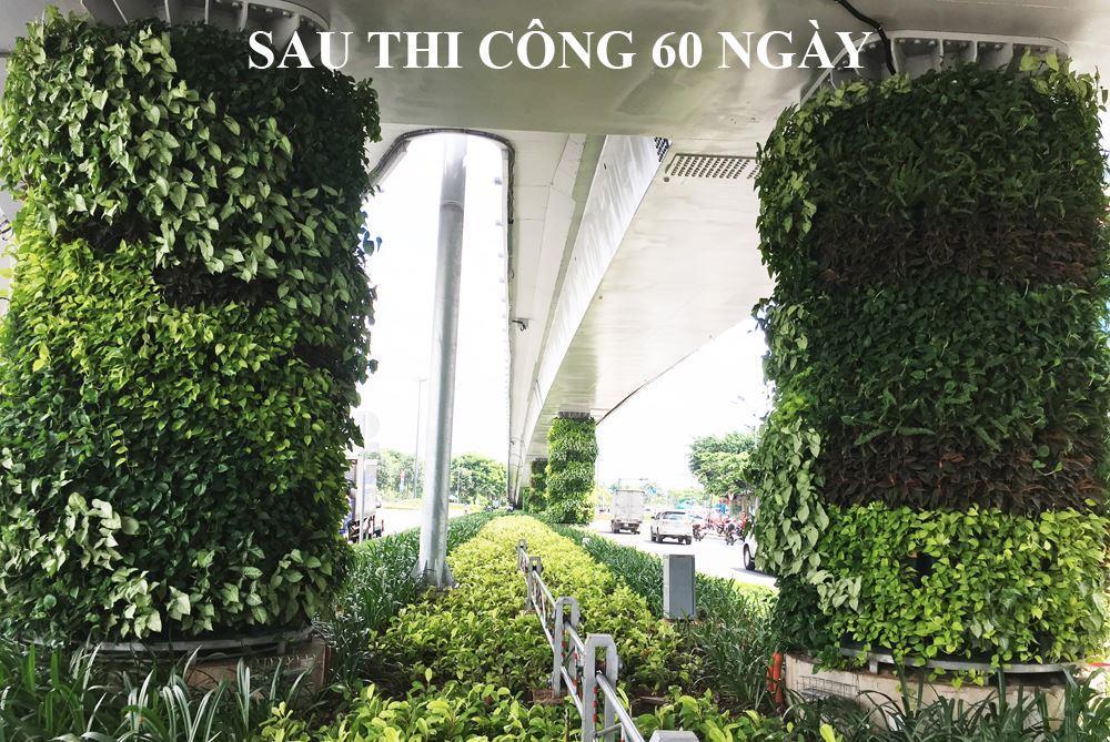 so-sanh-tuong-xanh-dung-Minigarden-sau-2-thang-21