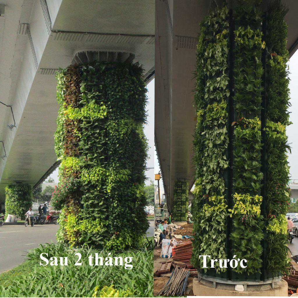 so-sanh-tuong-xanh-dung-Minigarden-sau-2-thang-8-1024x1024