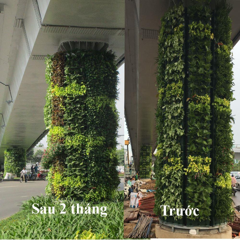 so-sanh-tuong-xanh-dung-Minigarden-sau 2 thang 8 web
